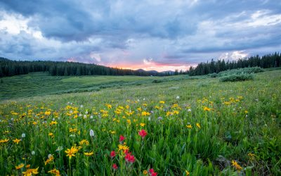 5 Tips for Spring