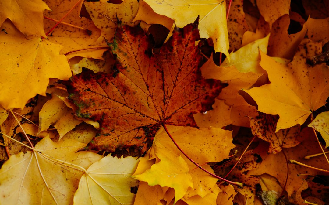 5 Tips for Autumn