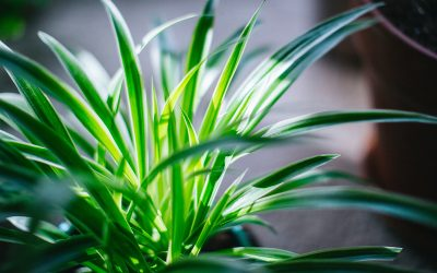 Houseplants: Cleansing companions