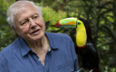 Documentary Reviews – David Attenborough
